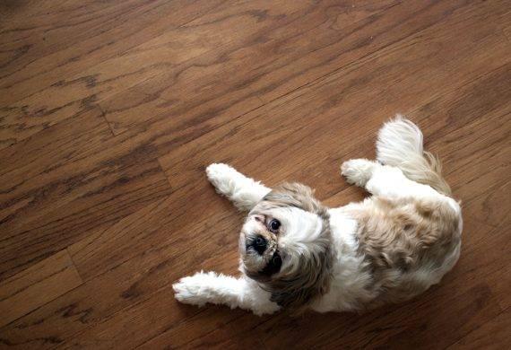 wood flooring - pets